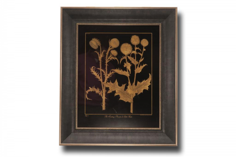 13684 Nodding Thistle 56 x 66cm