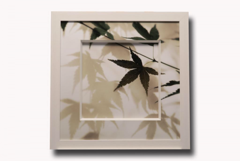 13499 Japanese Maple I 66 x 66cm
