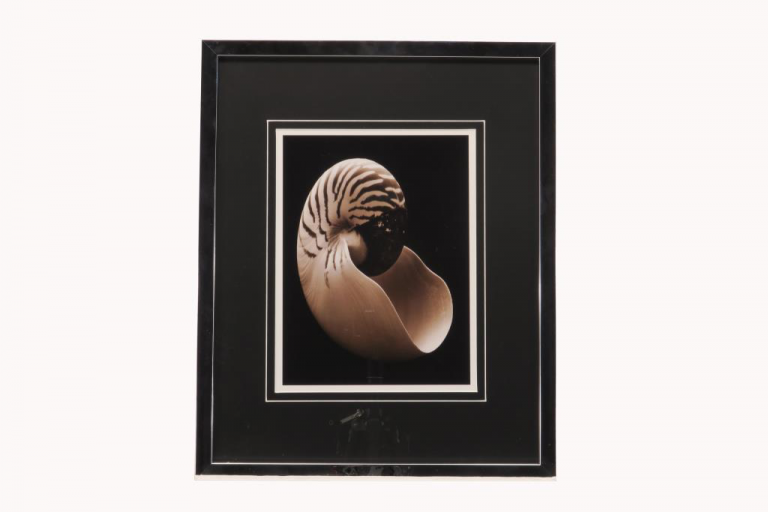 13518 Nautilus 43 x 53cm
