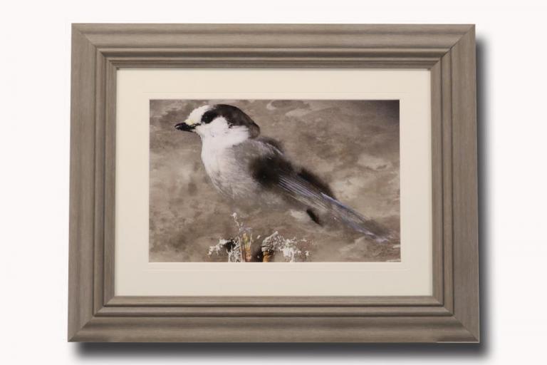 13562 Grey Jay I 71 x 56cm