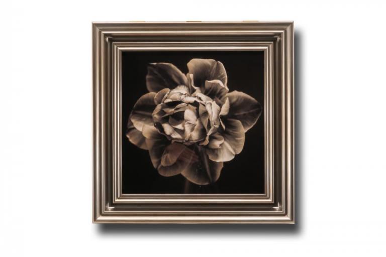 13618 Tulipa Still 56 x 56cm