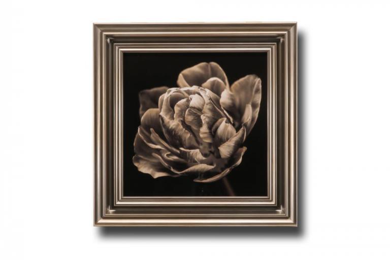 13619 Tulipani Still 56 x 56cm